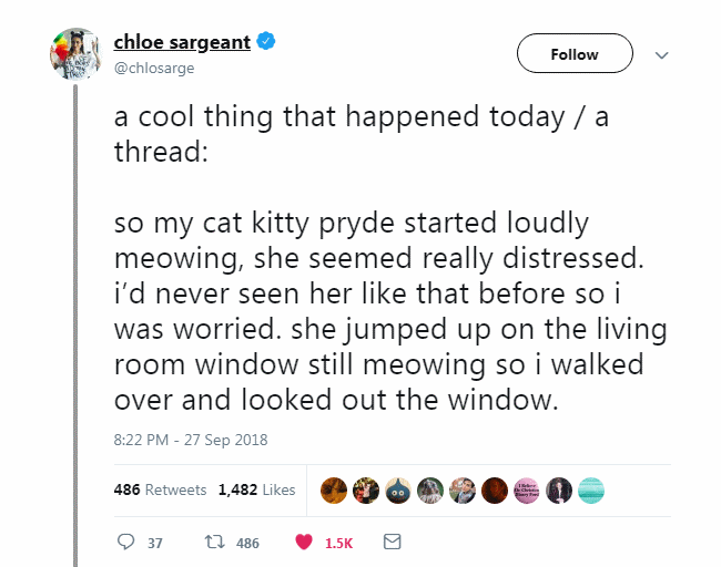 a cool thing that happened today / a thread:  so my cat kitty pryde started loudly meowing, she seemed really distressed. i'd never seen her like that before so i was worried. she jumped up on the living room window still meowing so i walked over and looked out the window.
